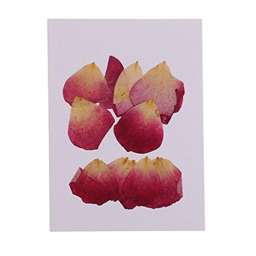 D DOLITY 20 Stück Getrocknete Gepresste Rosenblätter, Rosenblüten für Hochzeit Party Dekoration Romantische Atmosphäre für Gedenktag und Scrapbooking Kunsthandwerk - Rosenblätter Rosa Getrocknete