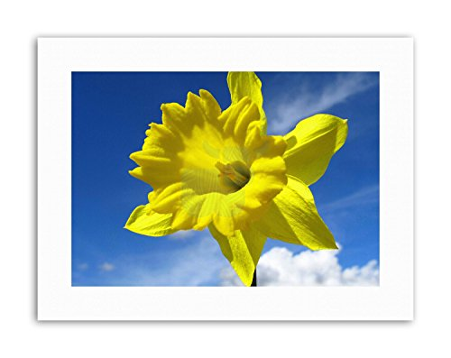 Wee Blue Coo LTD Sunny Yellow Daffodil Sky Bright Happy Poster Picture Canvas Art Prints - Daffodil Fine Art