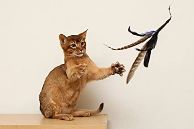 """Flying Frenzy Interactive Feather Cat Toy- 39"""" Single length Rod"""
