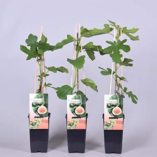 Unterpflanzung Belastbarkeit