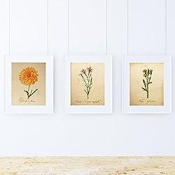 Bilderset BOTANIK. Poster mit Botanikillustrationen. Bilder zum Einrahmen mit Naturillustrationen. Innendekoration. Hochwertiges Papier 250g/qm - Pack Air