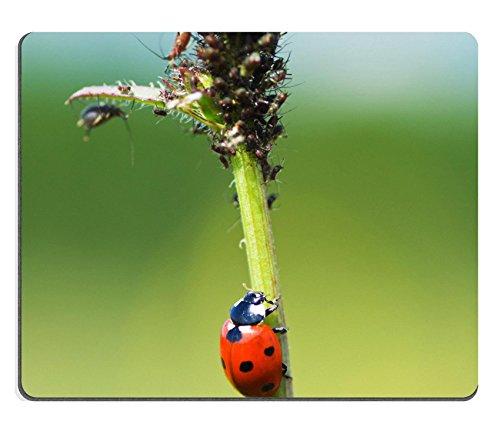 liili-tapis-de-souris-tapis-de-souris-en-caoutchouc-naturel-la-coccinelle-sangsues-sur-une-plante-au