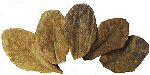 Nano Seemandelbaumblätter/Catappa Leaves 50g (ca.30Stk/10-15cm) Zur Förderung der Farbenpracht&Laichbereitschaft bei Zier – und Schwarzwasserfischen -> Bio-Wasseraufbereiter&Aquarium Dekoration