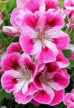 VISTARIC 14: Big Pots de fleurs jardiniÚres, 20 types, 50 PCS/Lot, rose graines arc-en-Belle rose graines bonsaïs graines, 14 B4LT8H