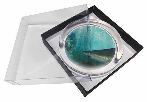 Shark Foto Glas Briefbeschwerer in Geschenkbox Weihnachtsgeschenk Idee (Fotos Für Glas-briefbeschwerer)