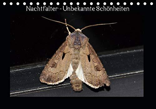 Nachtfalter - Unbekannte Schönheiten (Tischkalender 2020 DIN A5 quer): Heimische Nachtfalter aus Ostwestfalen (Monatskalender, 14 Seiten ) (CALVENDO Tiere)