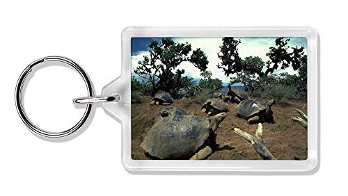 Advanta - Keyrings Galapagos-Schildkröte Foto Schlüsselbund TierstrumpffüllerGeschenk