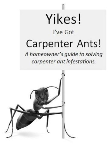 yikes-ive-got-carpenter-ants