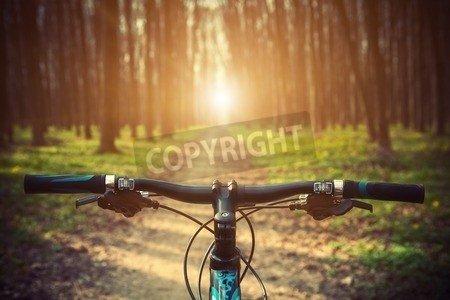 "Poster-Bild 120 x 80 cm: ""Mountain biking down hill descending fast on bicycle. View from bikers eyes."", Bild auf Poster"
