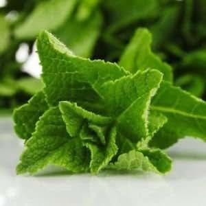 Indian Gardening Pepper Mint Seeds Herb Peppermint 20 Seeds