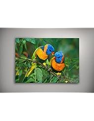 """Oiseaux 10035, Oiseaux Tropicaux, Poster en Vinyle Affiche Plastifiée Murale Pop-Art Décoration Intérieure avec Dessin Coloré. Grandeur: 20"""" x 30"""" - 51 x 76 cm"""