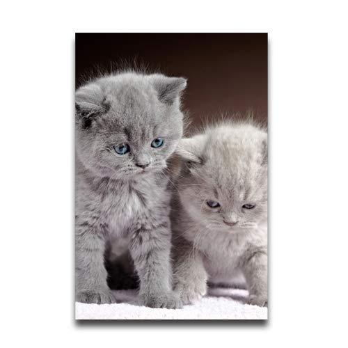 NewPostersWorld Poster mit niedlichen Zwei grauen Kätzchen, personalisierbar, dekorativ, dekorativ, für Wohnzimmer, 30,5 x 40,6 cm