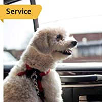 Pet Taxi - Within Dubai - 1 Cat - Airport Drop off