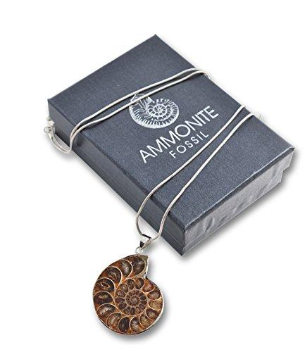 fossilised-ammonite-pendant