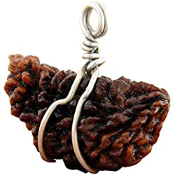 Ankita Gemstones 1 Mukhi Rudraksha Pendant 100% Natural Real 1 Mukhi Rudraksha Pendant