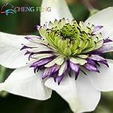 Heiße verkaufen50pcs / lot Mix Schöne Clematis Samen Bonsai Blumensamen-DIY Hausgarten-Easy Grow Jardin Pflanze Violet