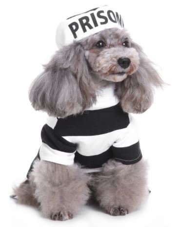 Midlee Inmate Hund Kostüm, Small (Gefangenen Kostüm Für Hund)