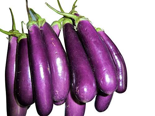 Géant à long plante de couleur pourpre producteurs d'œufs -> 100 graines par Samenchilishop