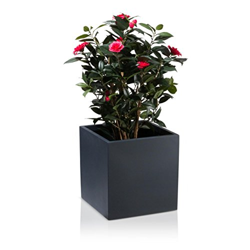 Pflanzkübel CUBO Fiberglas Pflanztopf - Farbe: anthrazit matt - robuster, UV-beständiger, wetterfester & frostsicherer Blumentopf für den Garten - TÜV-geprüfte Qualität