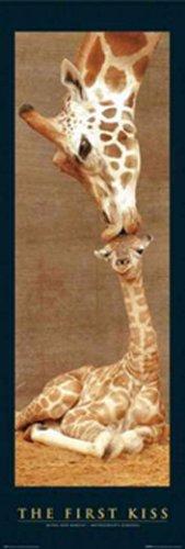 1art1 8196 Giraffen – First Kiss (b) Tür-Poster (158 x 53 cm)