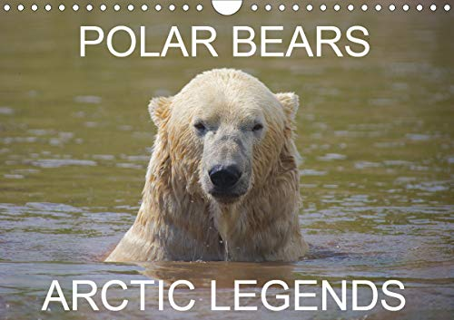 POLAR BEARS - ARCTIC LEGENDS (Wall Calendar 2020 DIN A4 Landscape): 2 Male Polar Bears compete in a test of strength. (Monthly calendar, 14 pages ) (Calvendo Places)