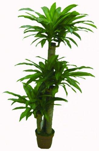 WAS 7202135 Kunstpflanze Drachenbaum, 135 cm