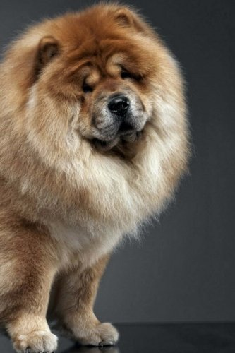 chow-chow-artified-pets-dog-journal-notebook-diary-wraparound-image-cover