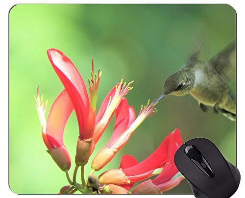 Mausunterlage Fertigen Sie, der Kolibri kundenspezifisch an, der rote Blume Spiel-Mausunterlagen fliegt und einzieht