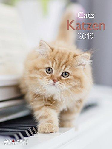 Katzen 2019 - Wandkalender, Posterkalender, Fotokalender, Katzenkalender  -  48 x 64 cm