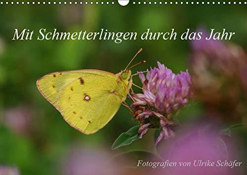 Mit Schmetterlingen durch das Jahr (Wandkalender 2019 DIN A3 quer): Filigrane Schmetterlinge in freier Natur (Monatskalender, 14 Seiten ) (CALVENDO Tiere)