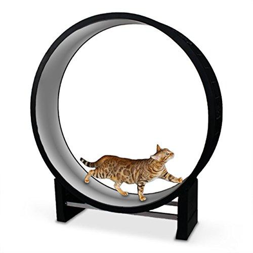 CanadianCat Company | Katzenlaufrad Cat in Motion Hellgrau - Trainingsgerät und Spielzeug für Katzen
