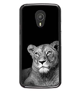 Fuson Designer Back Case Cover for Meizu M2 Note :: Meizu Note 2 (An animal wild horse safari )