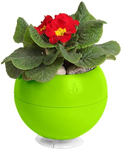 Self-watering Window Box (Greenball Smart Übertopf)
