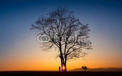 """Poster-Bild 110 x 70 cm: """"Abendlicht Baum"""", Bild auf Poster"""