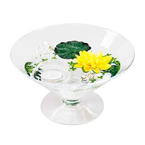 Cône en verre ronde-plateau-grand modèle-hauteur : 12 cm diamètre : 22 cm pointes-plat en verre sur pied avec forme de nénuphar jaune casablance design coupelle de glaskönig