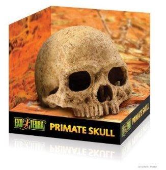 Exo Terra Human Skull Terrarium Décor for Reptiles terrarium accents, terrarium décor skull