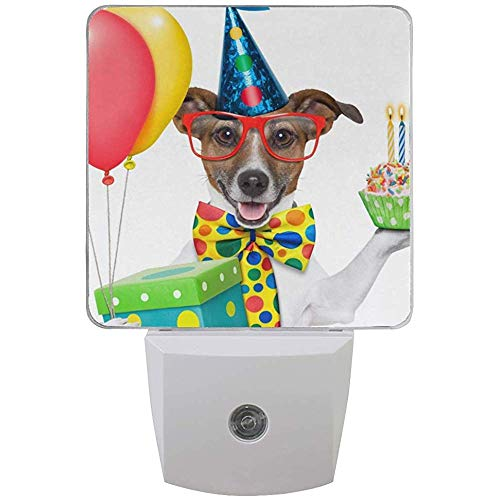 Katrine Store Candele notturne di Compleanno per Cani Candele Auto Senor Dusk to Dawn Lampada a LED per corridoio, Cucina, Bagno, Camera da Letto, S