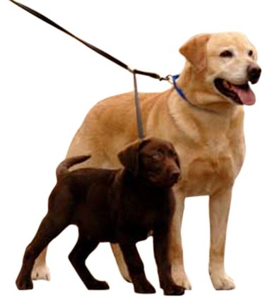 Artikelbild: Double Dog Leash Black