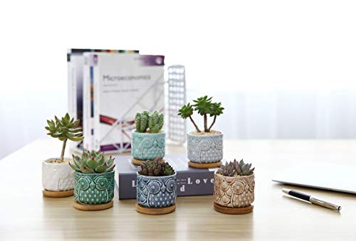 Zoom IMG-3 comsaf vaso per pianta grassa