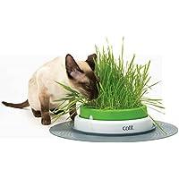 Portal Cool Catgrass Semillas Dactylis glomerata Digestión Vitaminas Salud 6000 Semillas