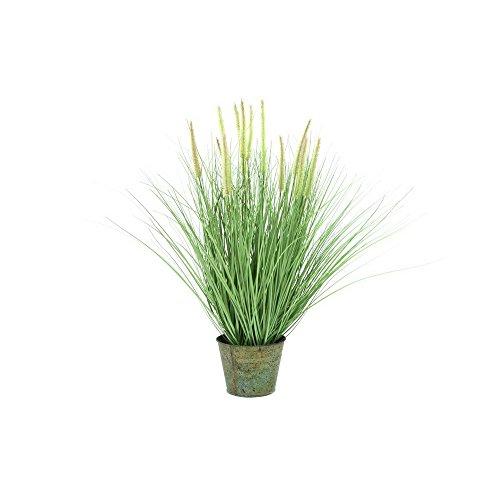 europalms-erba-ornamentali-fioritura-70-centimetri