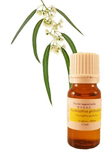 huile-essentielle-deucalyptus-globuleux-10ml