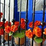 Go Garden 100 Stücke Mischfarbe Mini Geranien Garten Pelargonium Peltatum Blumen Topf Geranium Pflanze Mini Bonsai Blume Flores: Gelb