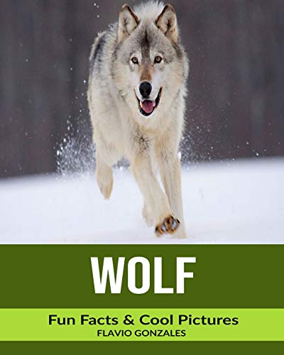 Wolf: Fun Facts & Cool Pictures