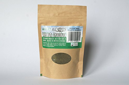 organic-hormone-rooting-powder-wild-atlantic-seaweed-root-cuttings-fast-naturally-75g-by-wild-roots