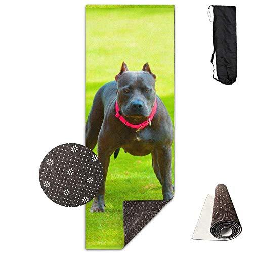 Vercxy Yogamatte, Pitbull Puppies, rutschfestes Futter, leicht zu reinigen, latexfrei, leicht und langlebig, 180 x 61 cm, Blau (Für Pitbulls Blau-gurt)