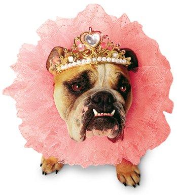 sdom-Queen Hund Kostüm, s, Rose ()
