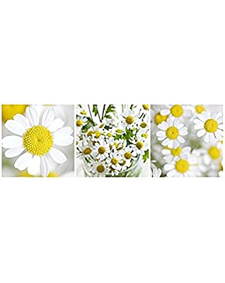 Daisy Yellow Flower Floral Canvas Wall Art Pictures Set of 3