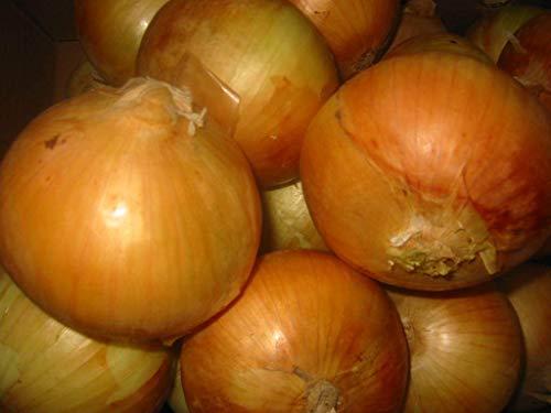 AGROBITS 1g (app. 200) onionSTUTTGARTER RIESEN deutschen Erbstück Organic Winterkeeper
