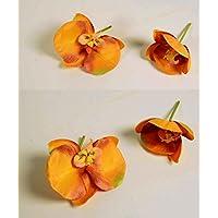 Suchergebnis Auf Amazon De Fur Orchideenbluten Basteln Malen